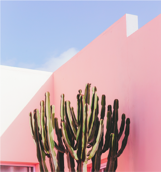 A cactus infront of a building